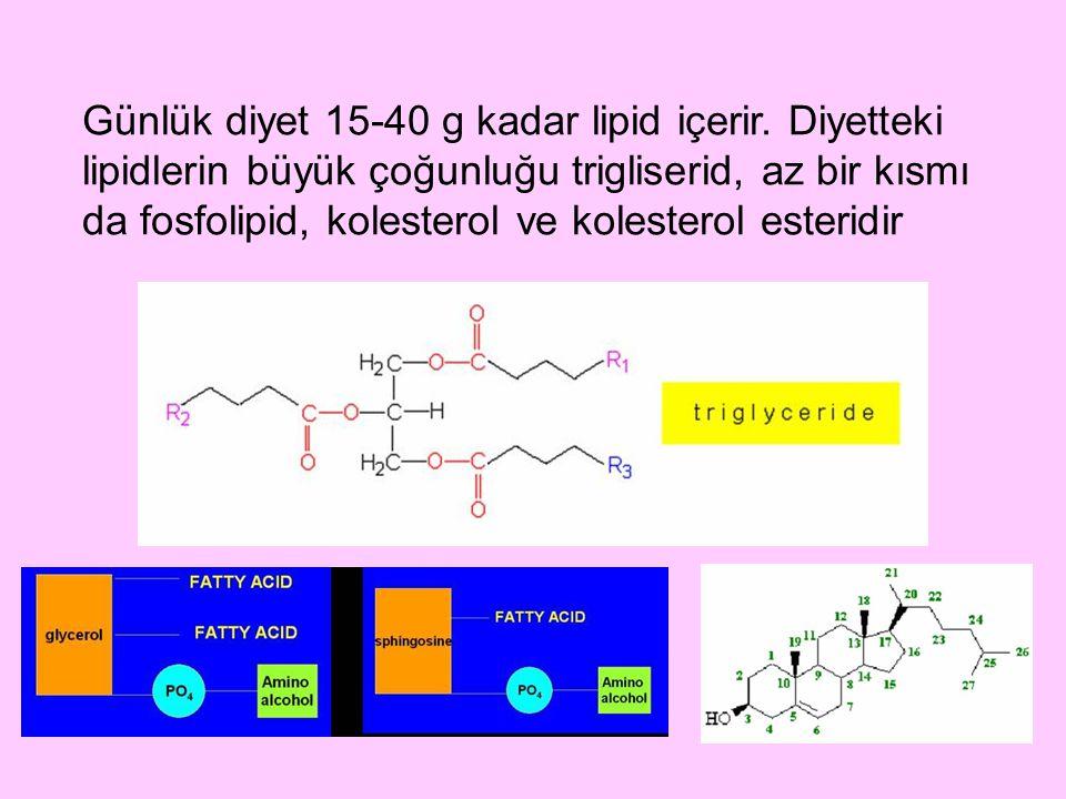 İlk oluşan olgun HDL, HDL 3 olarak bilinir.