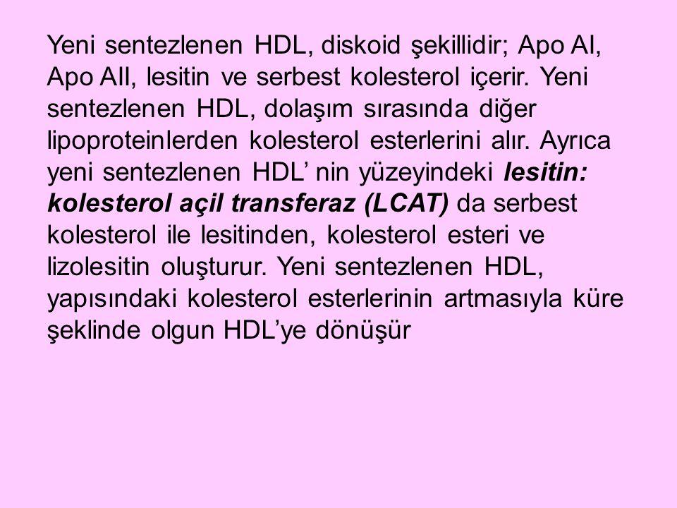 Yeni sentezlenen HDL, diskoid şekillidir; Apo AI, Apo AII, lesitin ve serbest kolesterol içerir. Yeni sentezlenen HDL, dolaşım sırasında diğer lipopro
