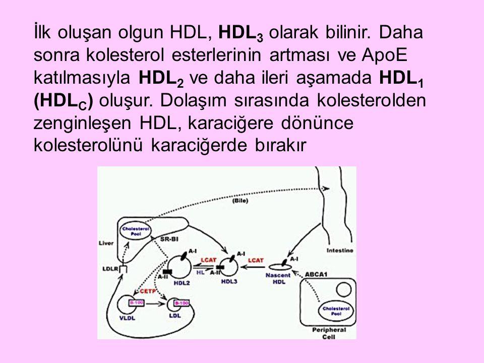 İlk oluşan olgun HDL, HDL 3 olarak bilinir. Daha sonra kolesterol esterlerinin artması ve ApoE katılmasıyla HDL 2 ve daha ileri aşamada HDL 1 (HDL C )