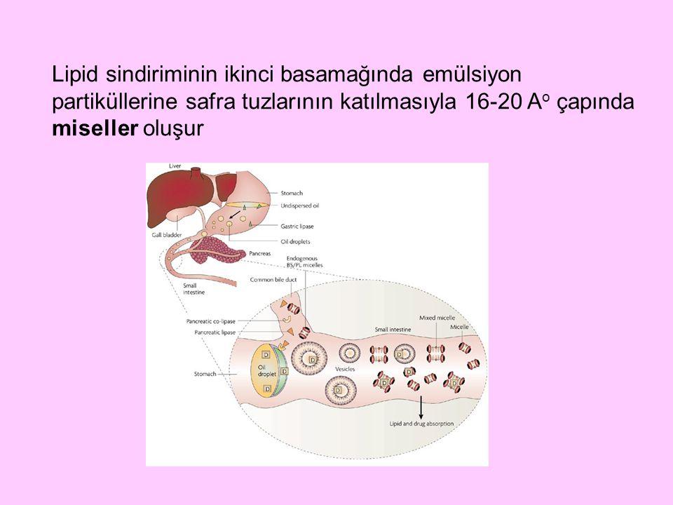 Lipid sindiriminin ikinci basamağında emülsiyon partiküllerine safra tuzlarının katılmasıyla 16-20 A o çapında miseller oluşur