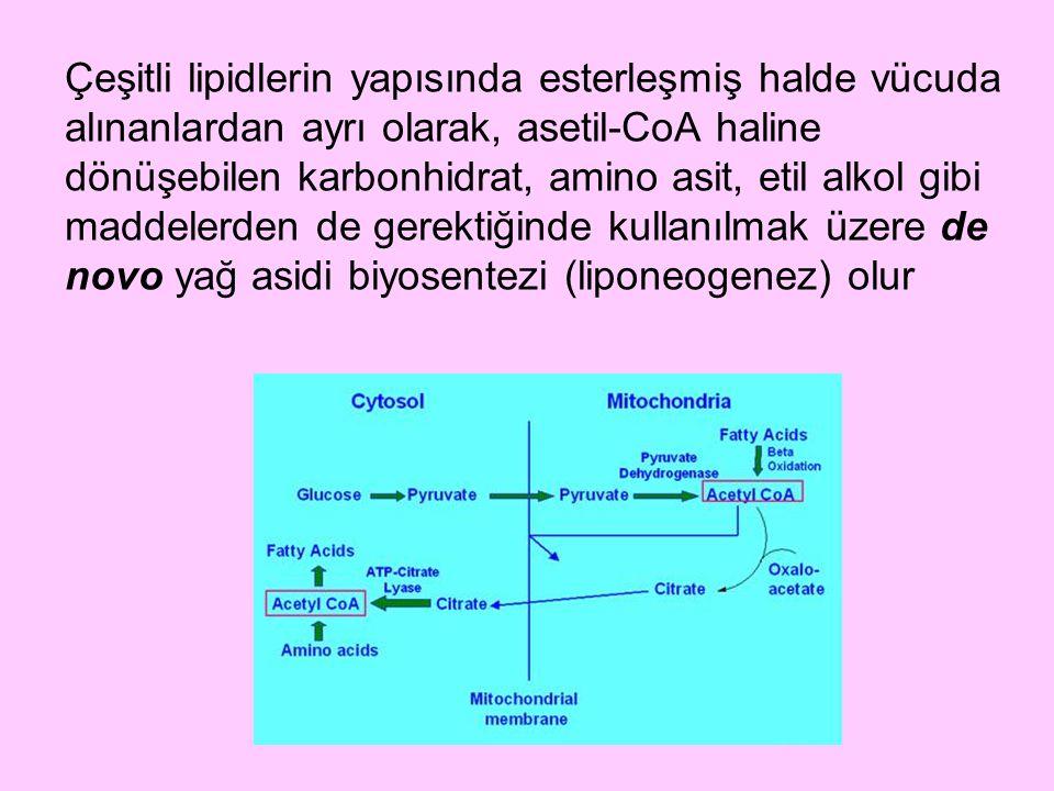Çeşitli lipidlerin yapısında esterleşmiş halde vücuda alınanlardan ayrı olarak, asetil-CoA haline dönüşebilen karbonhidrat, amino asit, etil alkol gib