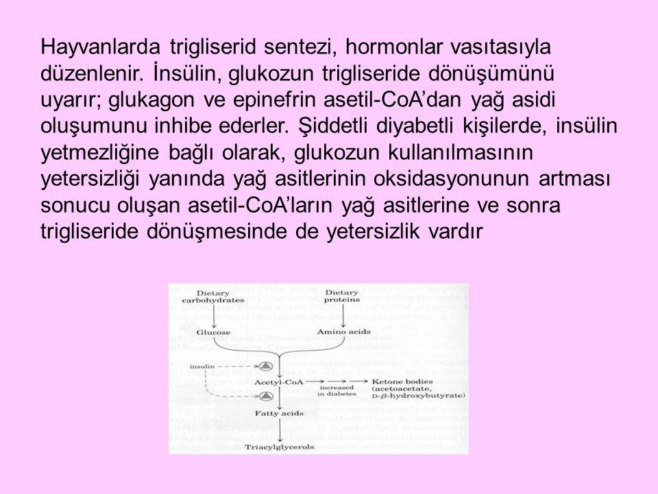Hayvanlarda trigliserid sentezi, hormonlar vasıtasıyla düzenlenir. İnsülin, glukozun trigliseride dönüşümünü uyarır; glukagon ve epinefrin asetil-CoA'