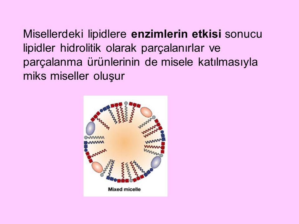 Trigliseridlerin hidrolizini katalize eden enzim, pankreas tarafından salgılanan ve optimal etkisini pH 7-9'da gösteren pankreatik lipazdır 1 molekül trigliseridin tam hidrolizi ile 3 molekül yağ asidi ve 1 molekül gliserol oluşur