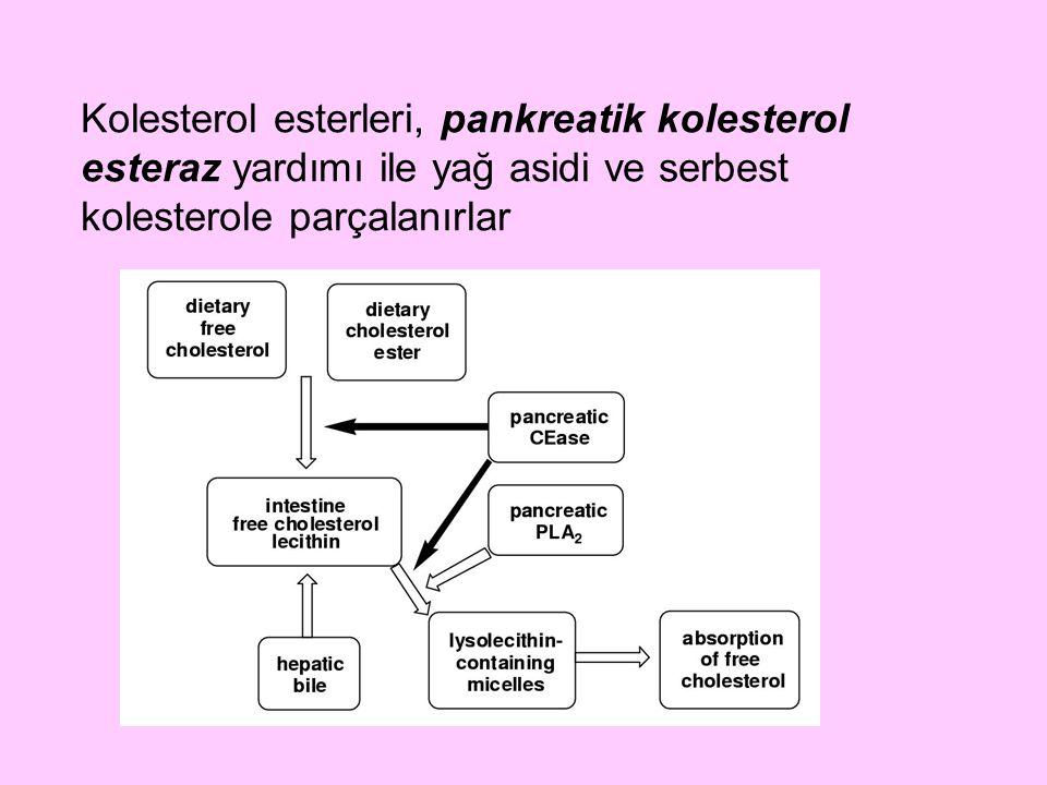 VLDL'ler, endojen trigliseridlere ek olarak serbest kolesterol, kolesterol esterleri, fosfolipid, Apo B100, Apo CI, Apo CII, Apo CIII, Apo E apolipoproteinlerini de içerirler