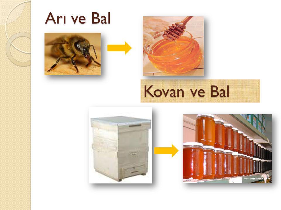 Arı ve Bal Kovan ve Bal