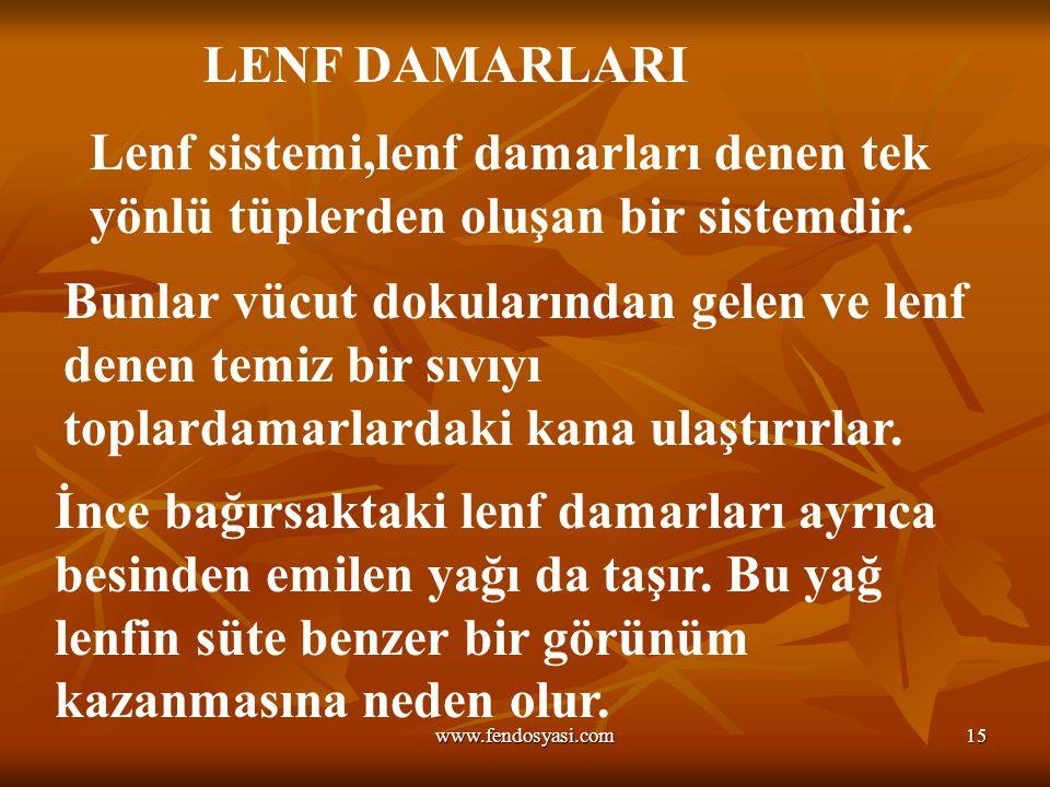 www.fendosyasi.com15 LENF DAMARLARI Lenf sistemi,lenf damarları denen tek yönlü tüplerden oluşan bir sistemdir. Bunlar vücut dokularından gelen ve len