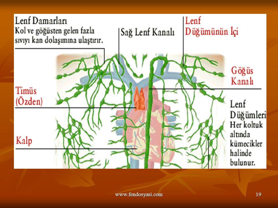 www.fendosyasi.com19