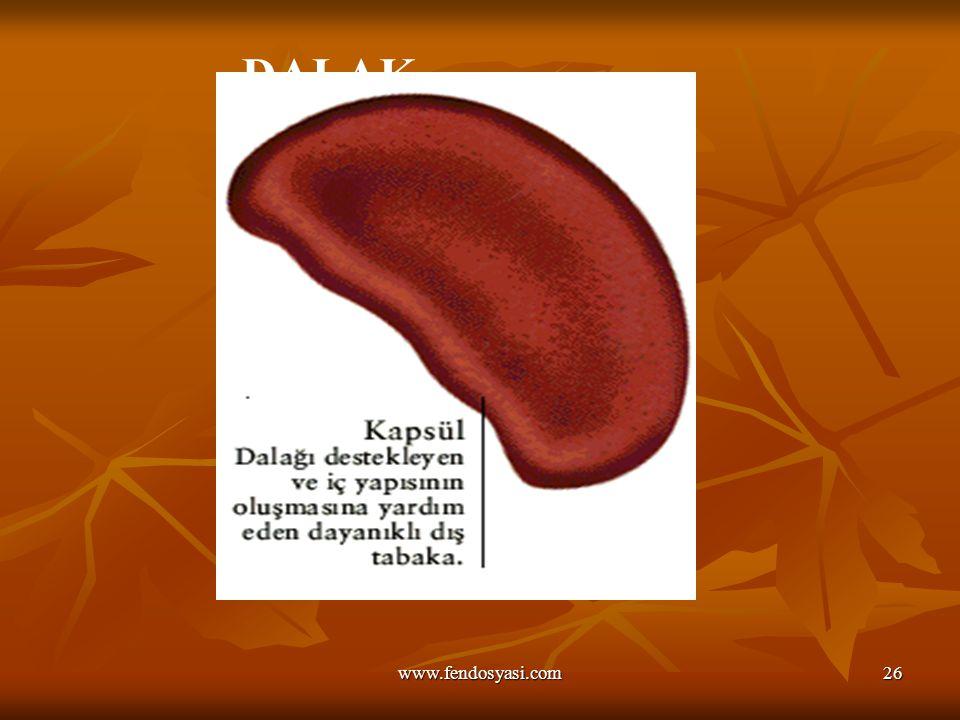 www.fendosyasi.com26 DALAK