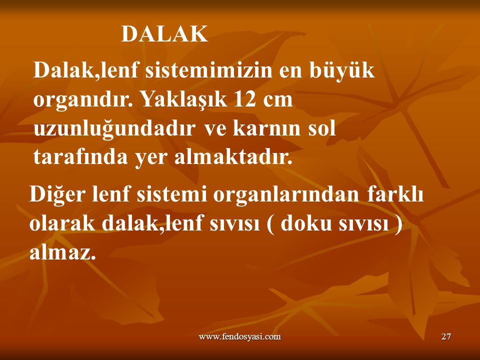 www.fendosyasi.com27 DALAK Dalak,lenf sistemimizin en büyük organıdır. Yaklaşık 12 cm uzunluğundadır ve karnın sol tarafında yer almaktadır. Diğer len