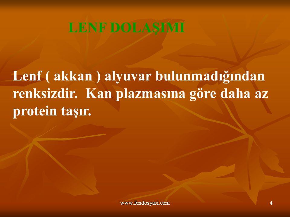 www.fendosyasi.com4 Lenf ( akkan ) alyuvar bulunmadığından renksizdir. Kan plazmasına göre daha az protein taşır. LENF DOLAŞIMI