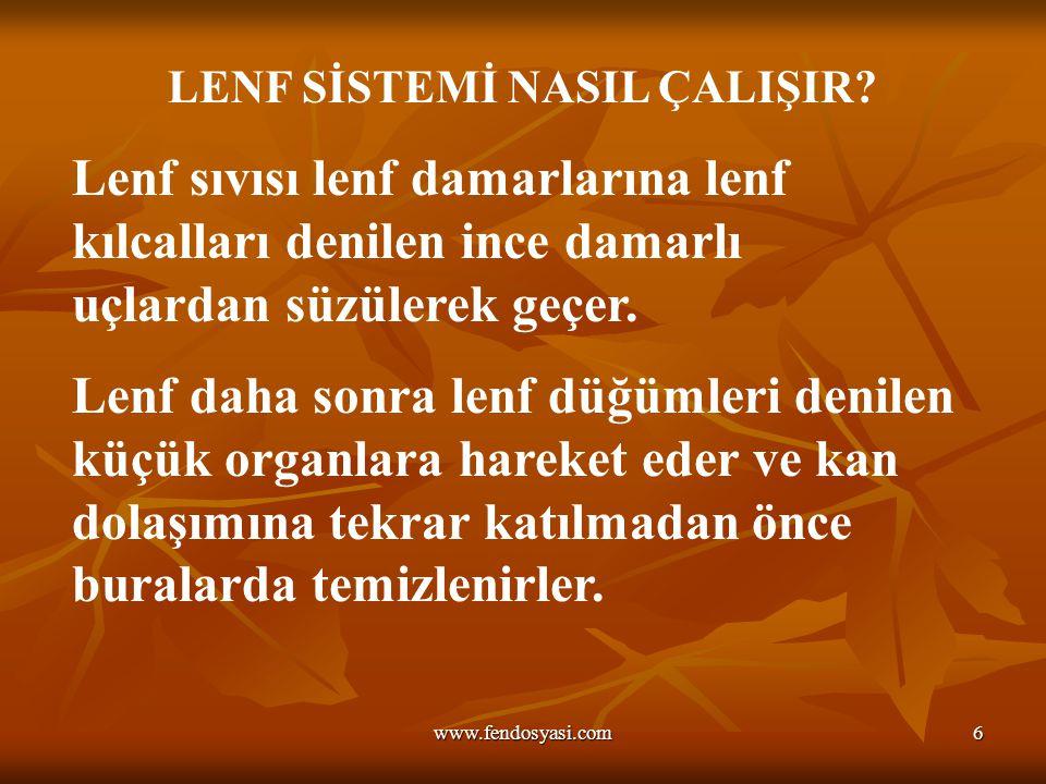 www.fendosyasi.com6 LENF SİSTEMİ NASIL ÇALIŞIR.