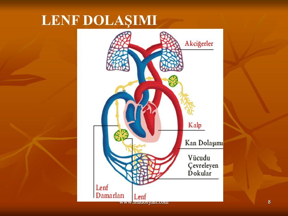 www.fendosyasi.com8 LENF DOLAŞIMI