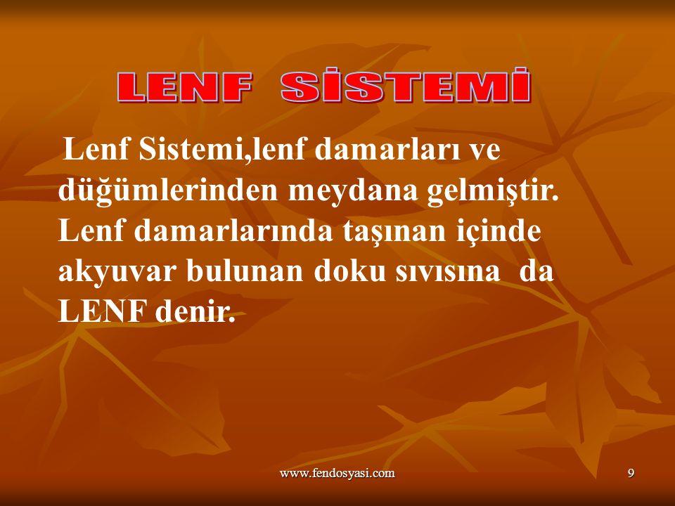 www.fendosyasi.com9 Lenf Sistemi,lenf damarları ve düğümlerinden meydana gelmiştir.