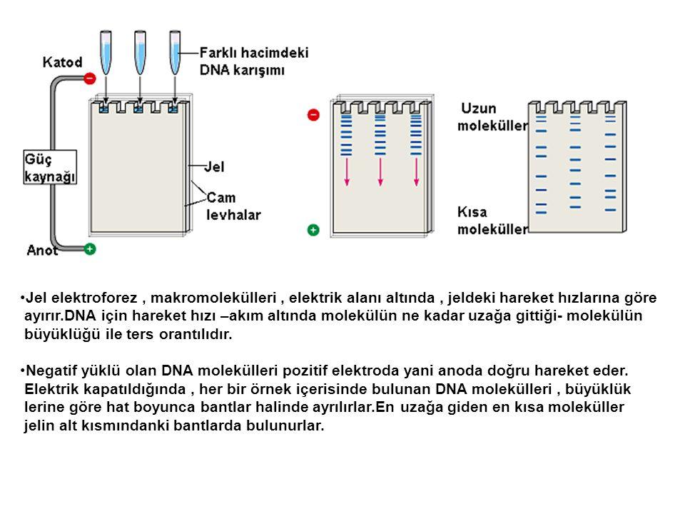 Jel elektroforez, makromolekülleri, elektrik alanı altında, jeldeki hareket hızlarına göre ayırır.DNA için hareket hızı –akım altında molekülün ne kad