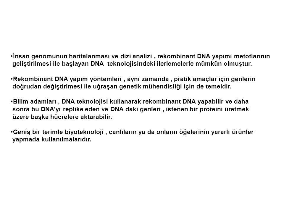 Hücre içerisine girdiğinde faj DNA'sı replike olur her biri yabancı DNA taşıyan yeni faj partikülleri oluşturur.