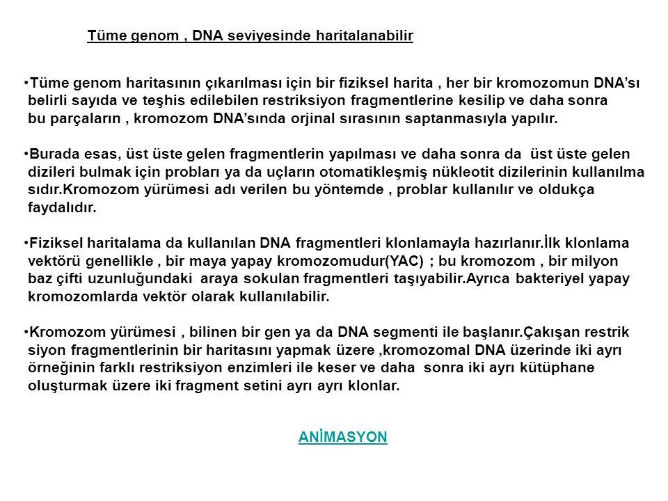 Tüme genom, DNA seviyesinde haritalanabilir Tüme genom haritasının çıkarılması için bir fiziksel harita, her bir kromozomun DNA'sı belirli sayıda ve t