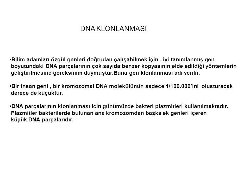 DNA KLONLANMASI Bilim adamları özgül genleri doğrudan çalışabilmek için, iyi tanımlanmış gen boyutundaki DNA parçalarının çok sayıda benzer kopyasının