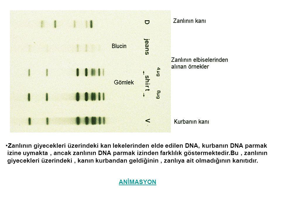Zanlının giyecekleri üzerindeki kan lekelerinden elde edilen DNA, kurbanın DNA parmak izine uymakta, ancak zanlının DNA parmak izinden farklılık göste