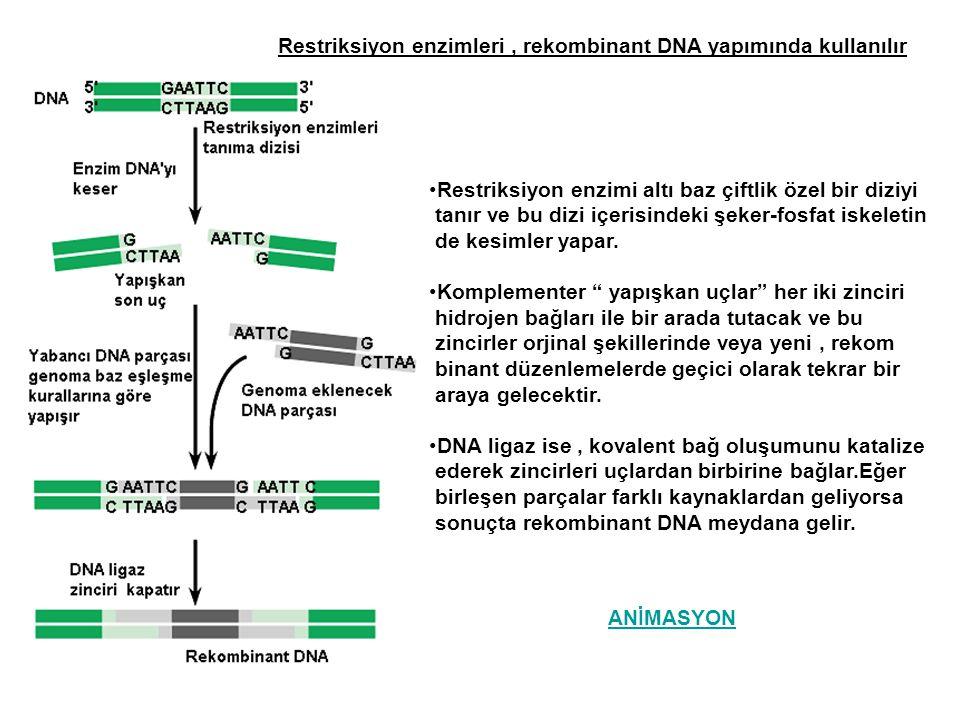 Genom dizisi, önemli biyolojik soruların cevaplanmasına ipucu sağlar İnsan genomunda, süpriz olarak daha az sayıda genin bulunmasıdır.İnsanda 30.000 ile 40.000 arasında gen bulunur.İnsan genomunun büyük bir kısmı kodlama yapmayan genlerden oluşmuştur ve bu DNA'nında büyük bir kısmı tekrarlamış DNA dır.