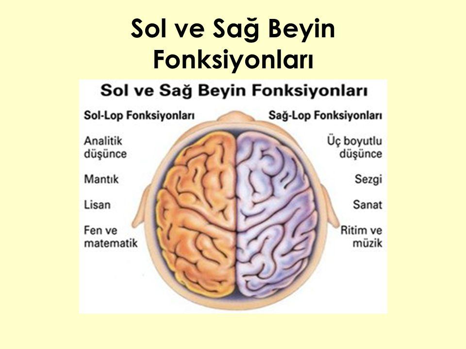 Sol ve Sağ Beyin Fonksiyonları