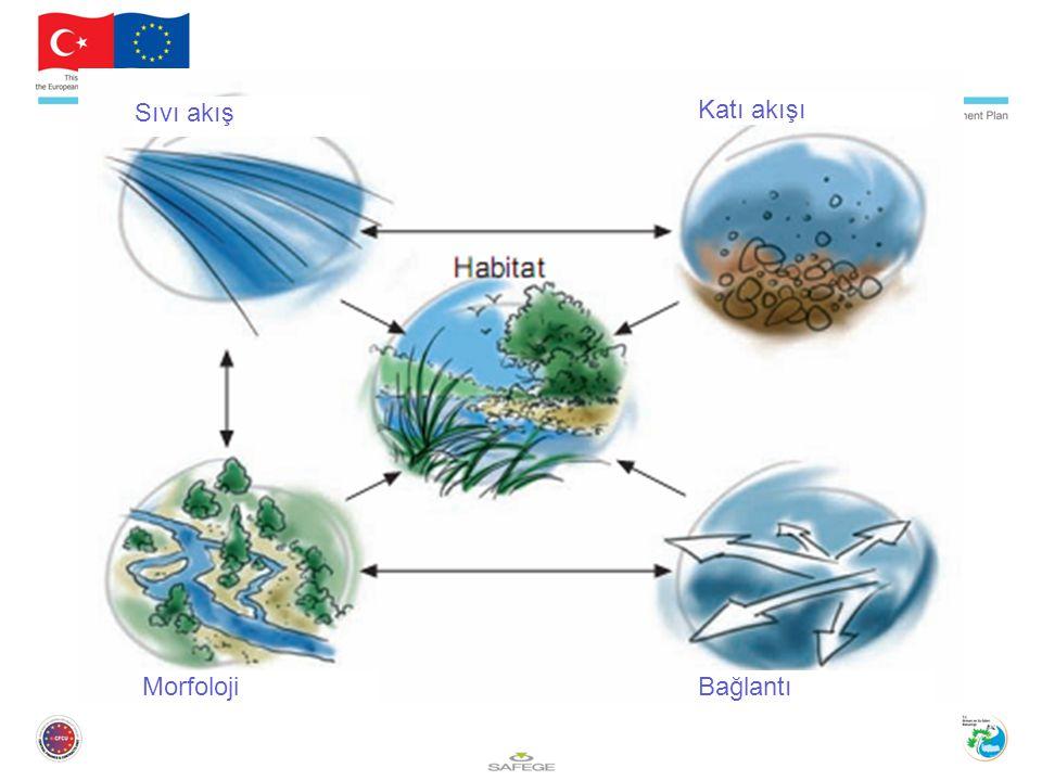 Baraj ve diğer boyuna engellerin kaldırılması Boyuna engellerin kaldırılması akış (fluvial) dinamikve ekolojik devamlılığın tekrar oluşmasını sağlar.