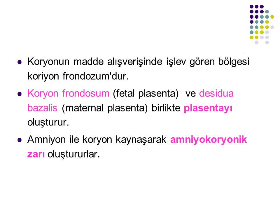 Plasenta iki kısımdan meydana gelir: Fetal kısım; koryon frondosum Maternal kısım; Endometriyumun desidua bazalis