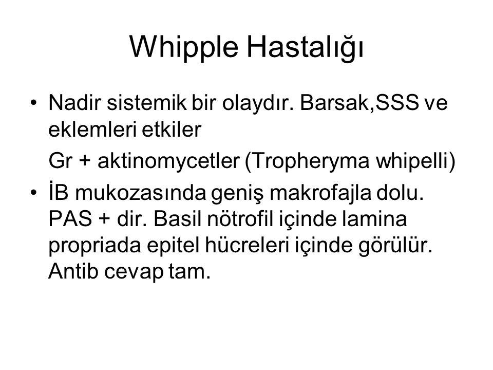 Whipple Hastalığı Nadir sistemik bir olaydır. Barsak,SSS ve eklemleri etkiler Gr + aktinomycetler (Tropheryma whipelli) İB mukozasında geniş makrofajl