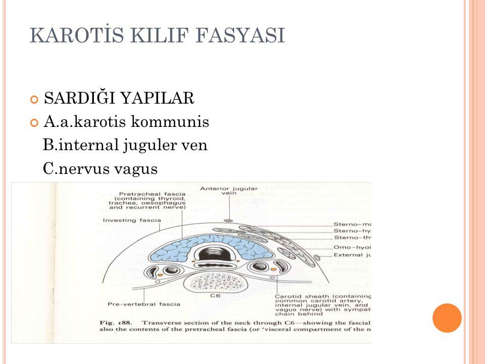 KAROTİS KILIF FASYASI SARDIĞI YAPILAR A.a.karotis kommunis B.internal juguler ven C.nervus vagus
