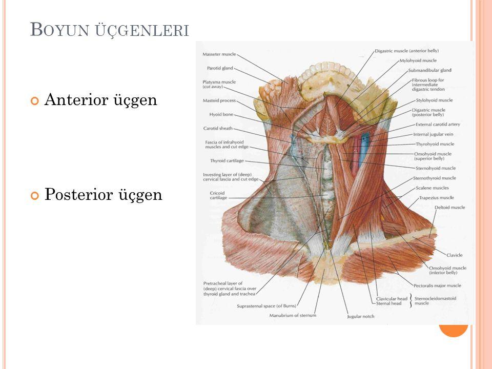 B OYUN ÜÇGENLERI Anterior üçgen Posterior üçgen