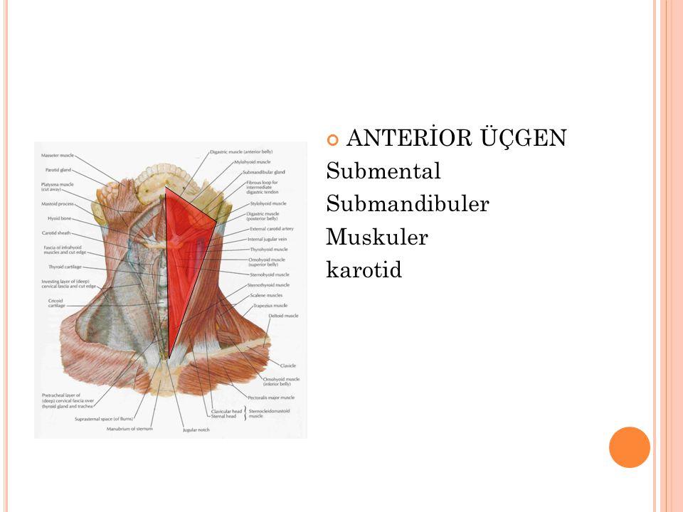 ANTERİOR ÜÇGEN Submental Submandibuler Muskuler karotid