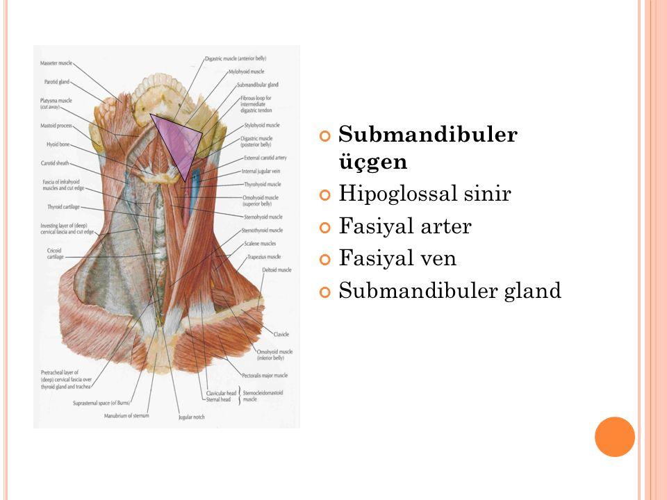 Submandibuler üçgen Hipoglossal sinir Fasiyal arter Fasiyal ven Submandibuler gland