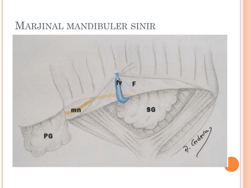 M ARJINAL MANDIBULER SINIR