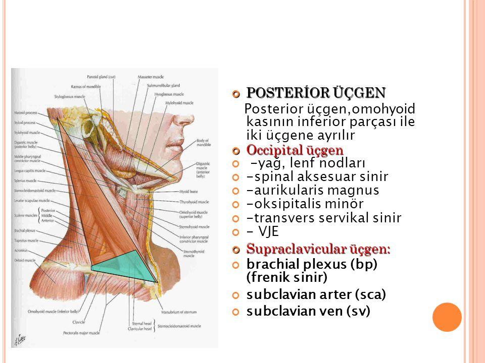POSTERİOR ÜÇGEN Posterior üçgen,omohyoid kasının inferior parçası ile iki üçgene ayrılır Occipital üçgen -yağ, lenf nodları -spinal aksesuar sinir -aurikularis magnus -oksipitalis minör -transvers servikal sinir - VJE Supraclavicular üçgen: brachial plexus (bp) (frenik sinir) subclavian arter (sca) subclavian ven (sv)