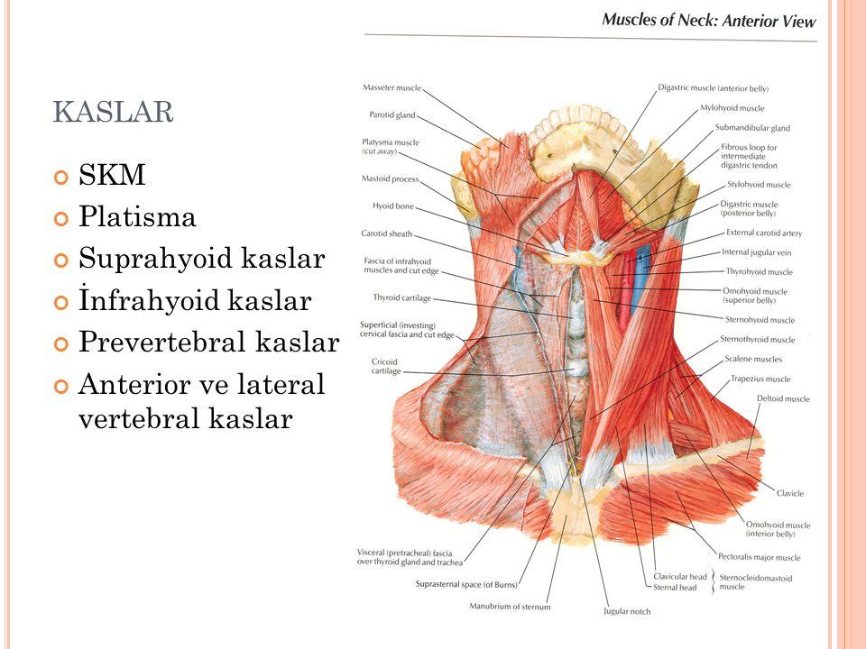 KASLAR SKM Platisma Suprahyoid kaslar İnfrahyoid kaslar Prevertebral kaslar Anterior ve lateral vertebral kaslar