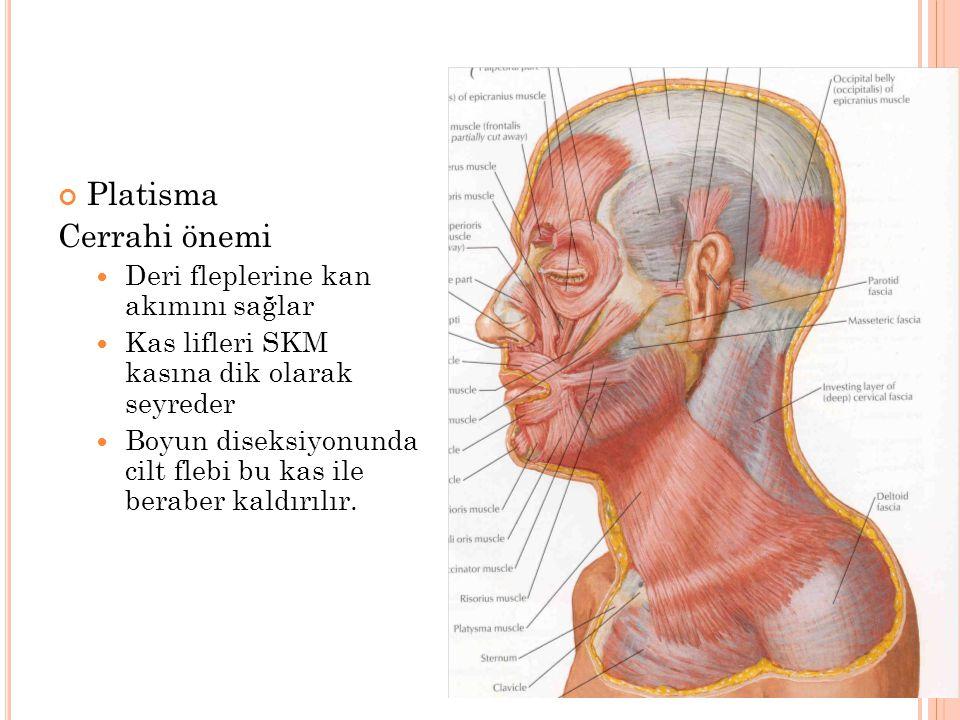 Platisma Cerrahi önemi Deri fleplerine kan akımını sağlar Kas lifleri SKM kasına dik olarak seyreder Boyun diseksiyonunda cilt flebi bu kas ile beraber kaldırılır.