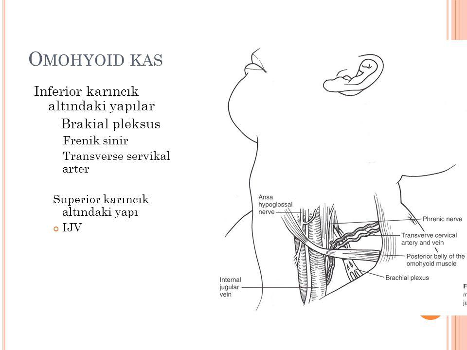O MOHYOID KAS Inferior karıncık altındaki yapılar Brakial pleksus Frenik sinir Transverse servikal arter Superior karıncık altındaki yapı IJV