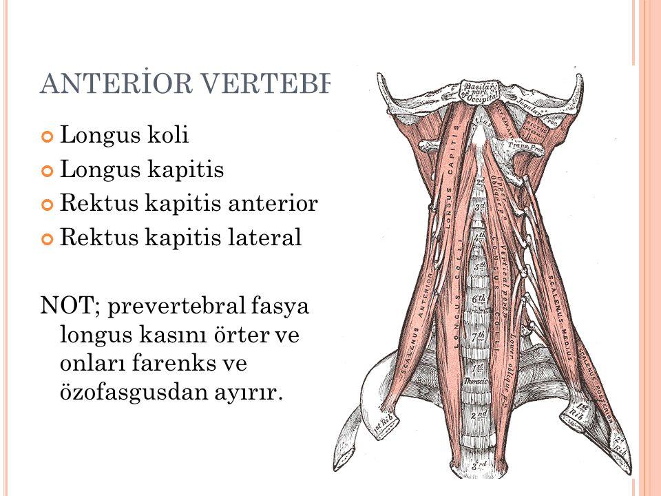 ANTERİOR VERTEBRAL KASLAR Longus koli Longus kapitis Rektus kapitis anterior Rektus kapitis lateral NOT; prevertebral fasya longus kasını örter ve onları farenks ve özofasgusdan ayırır.