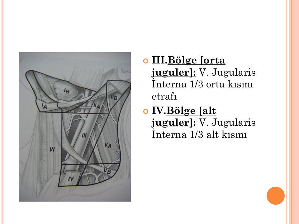 III.Bölge [orta juguler]: V.Jugularis İnterna 1/3 orta kısmı etrafı IV.Bölge [alt juguler]: V.