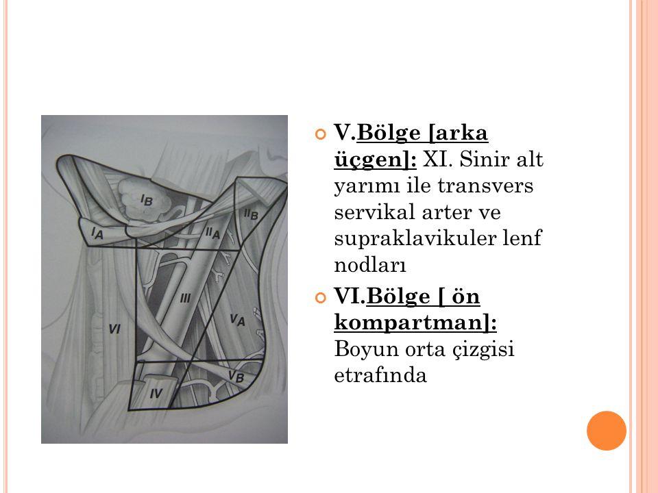 V.Bölge [arka üçgen]: XI.