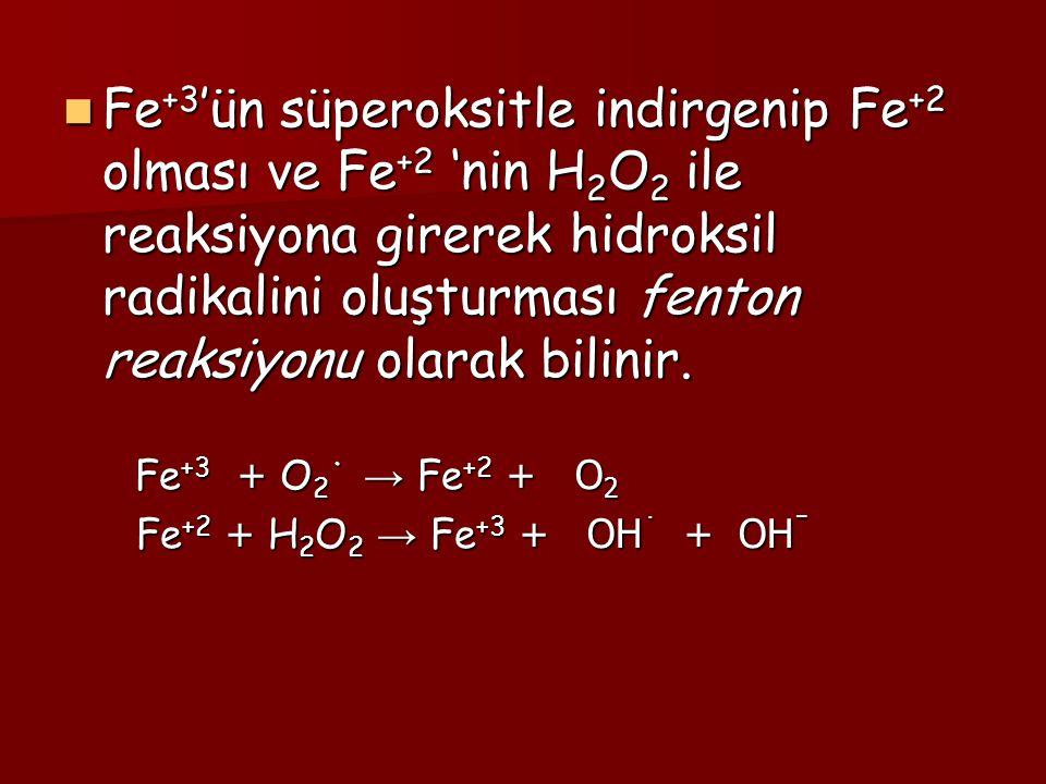 Fe +3 'ün süperoksitle indirgenip Fe +2 olması ve Fe +2 'nin H 2 O 2 ile reaksiyona girerek hidroksil radikalini oluşturması fenton reaksiyonu olarak
