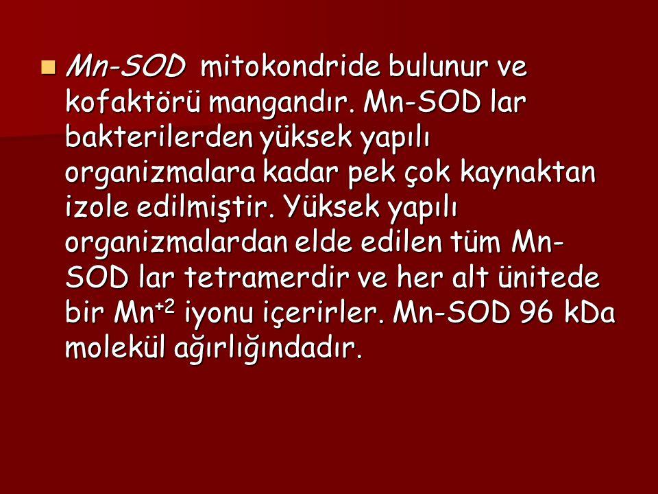 Mn-SOD mitokondride bulunur ve kofaktörü mangandır. Mn-SOD lar bakterilerden yüksek yapılı organizmalara kadar pek çok kaynaktan izole edilmiştir. Yük