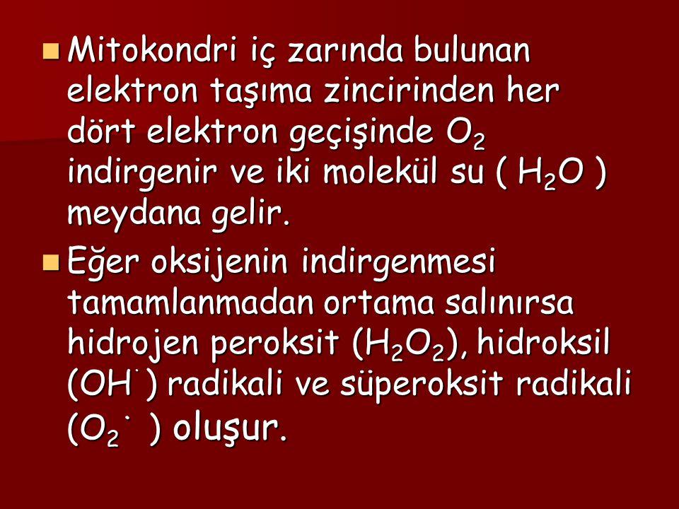 Süperoksit radikali (O 2 ˙ ) Süperoksit radikali (O 2 ˙ ) Moleküler oksijenin indirgeyici bir ajandan bir elektron alması sonucu süperoksit radikali (O 2 ˙ ) oluşur.