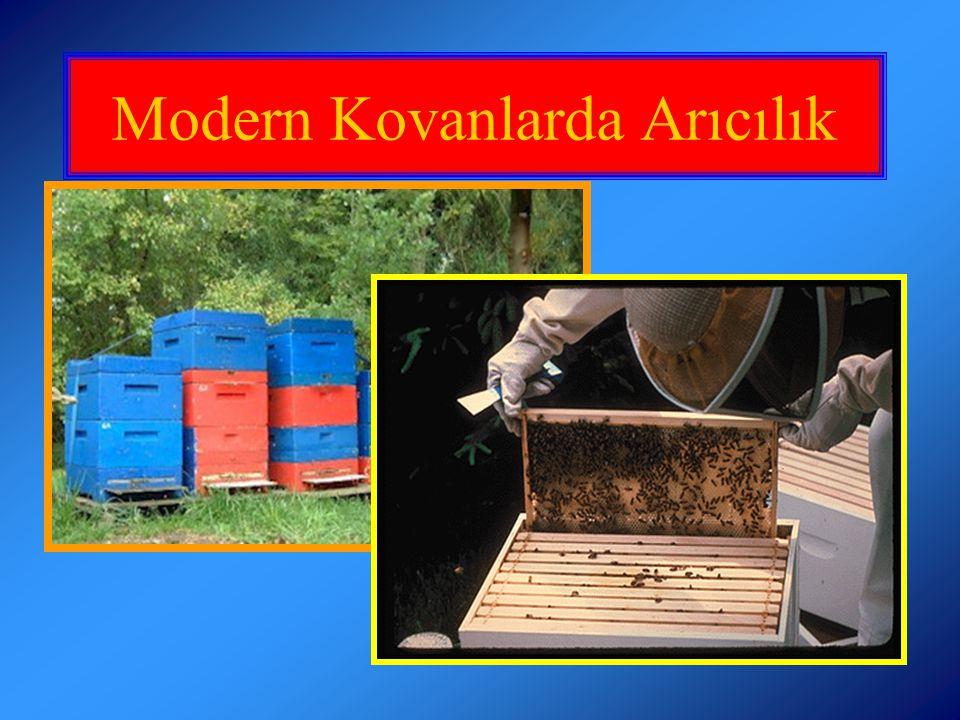 Arıların yerel koşullara adapte olabilme kapasitesi, dayanıklıkları ve hastalıklara karşı dirençliliklerine göre Apis mellifera tür ve ekotipleri tercih edilmelidir.
