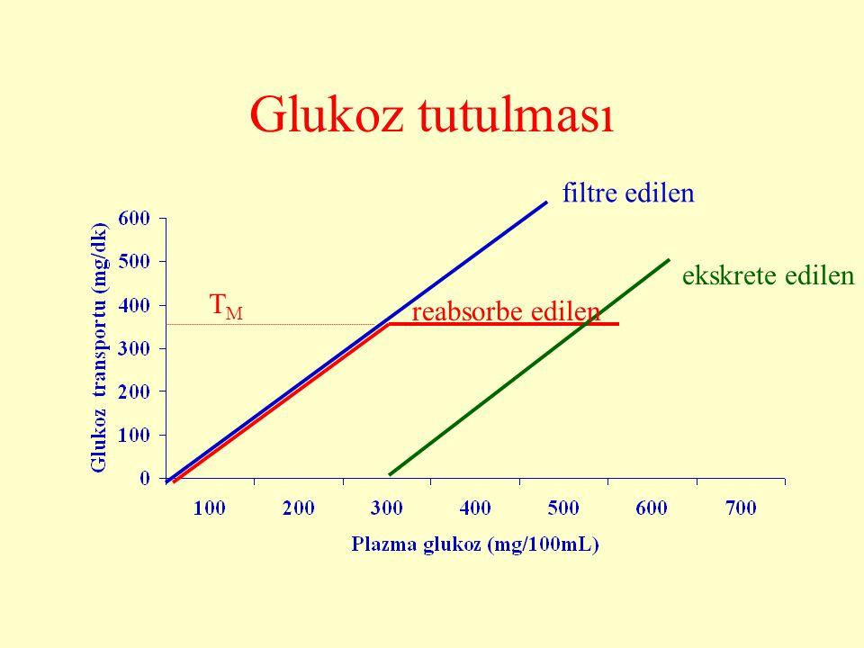 Glukoz tutulması filtre edilen reabsorbe edilen ekskrete edilen TMTM