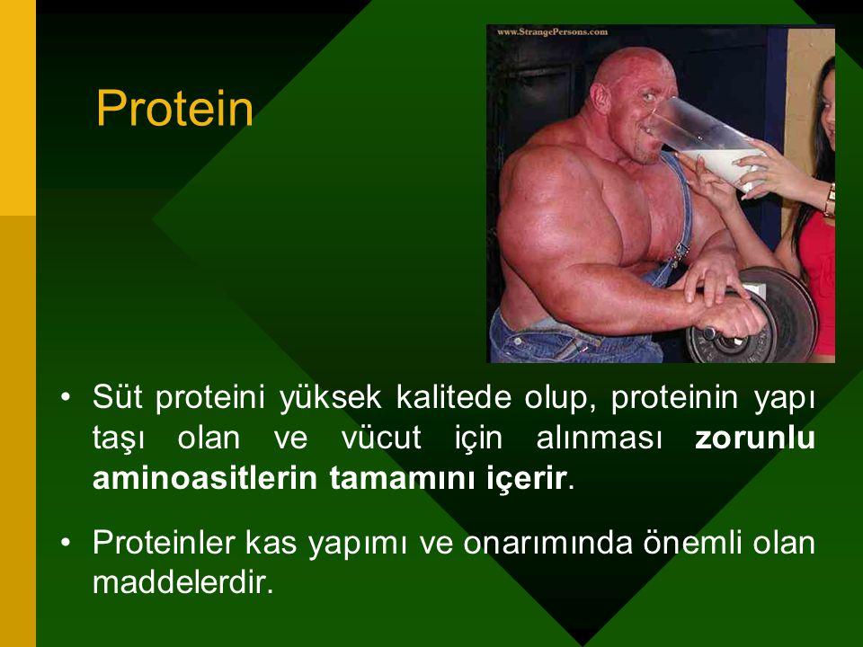 Protein Süt proteini yüksek kalitede olup, proteinin yapı taşı olan ve vücut için alınması zorunlu aminoasitlerin tamamını içerir. Proteinler kas yapı