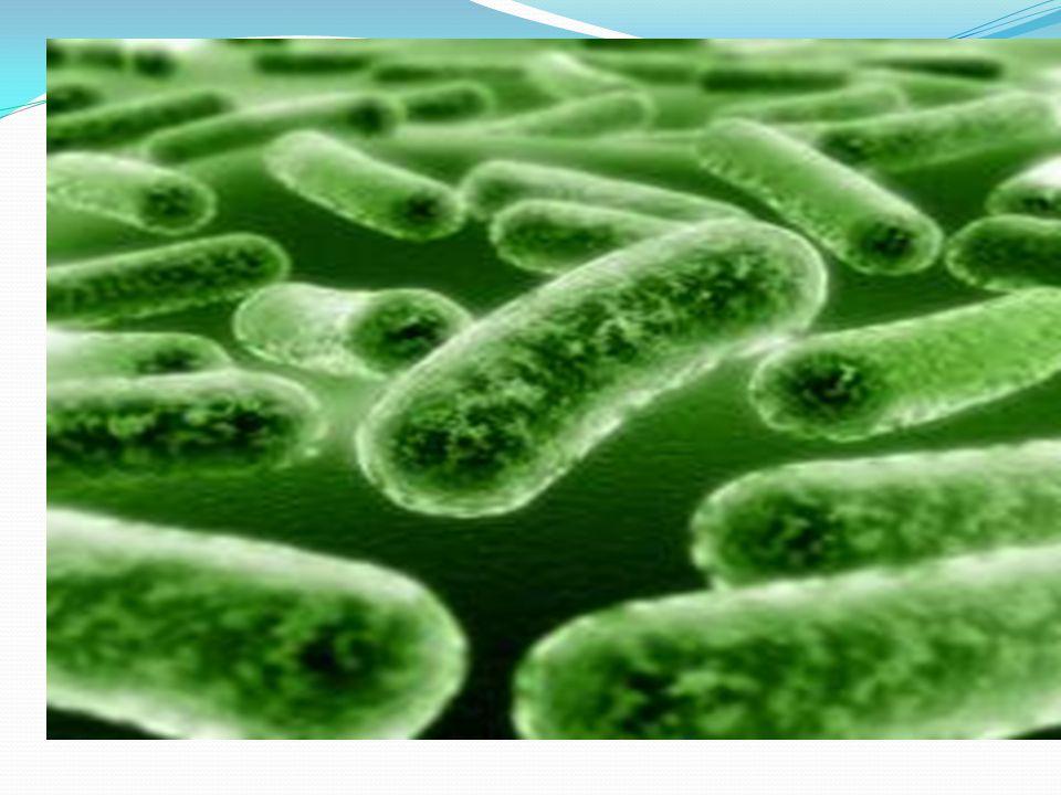 100 trilyon bakteri İnsan vücudunda 10 trilyon hücre bulunur.