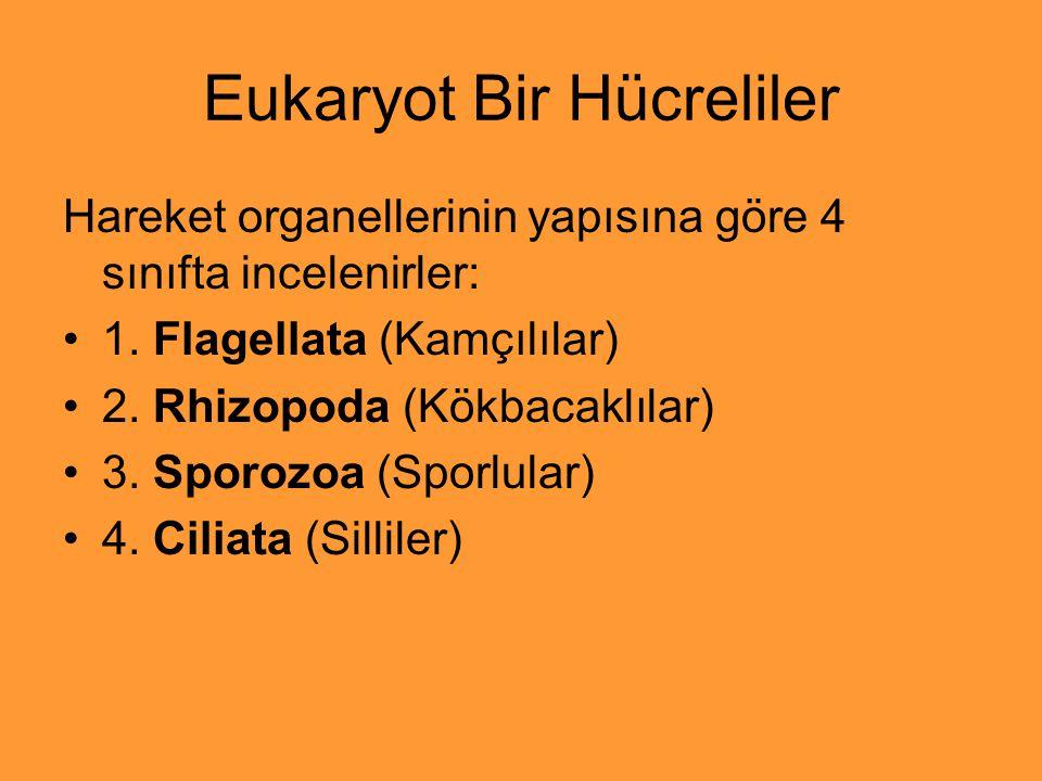 Eukaryot Bir Hücreliler Hareket organellerinin yapısına göre 4 sınıfta incelenirler: 1. Flagellata (Kamçılılar) 2. Rhizopoda (Kökbacaklılar) 3. Sporoz