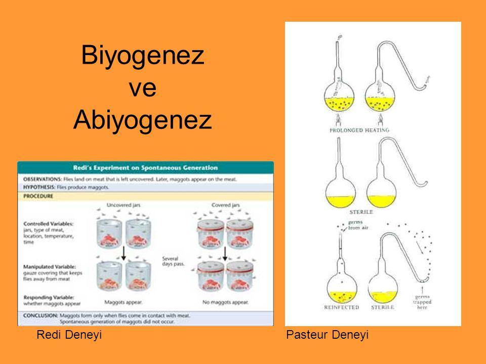 Biyogenez ve Abiyogenez Redi Deneyi Pasteur Deneyi