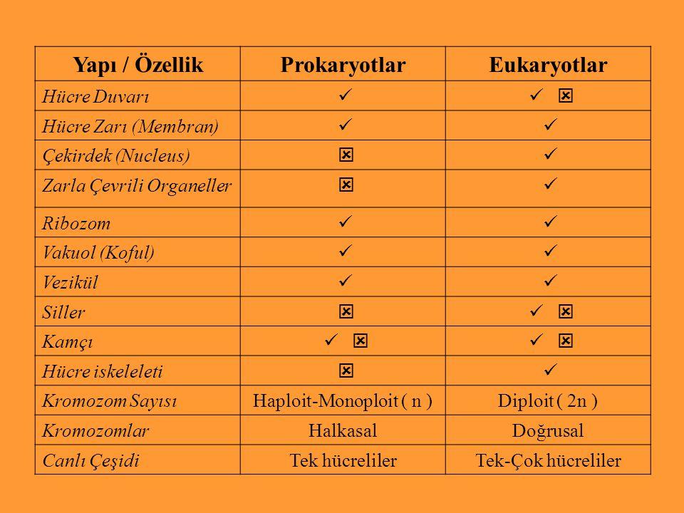 Yapı / ÖzellikProkaryotlarEukaryotlar Hücre Duvarı  Hücre Zarı (Membran) Çekirdek (Nucleus)  Zarla Çevrili Organeller  Ribozom Vakuol (Koful) Vezi