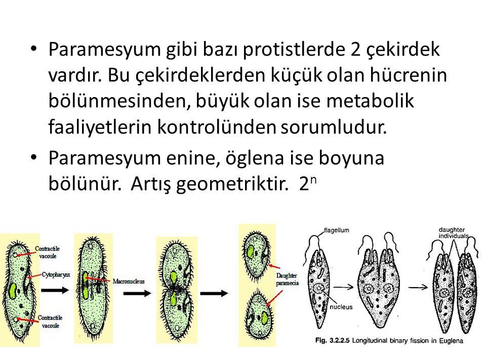 Paramesyum gibi bazı protistlerde 2 çekirdek vardır. Bu çekirdeklerden küçük olan hücrenin bölünmesinden, büyük olan ise metabolik faaliyetlerin kontr